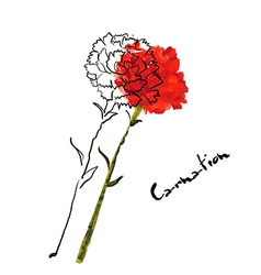 with carnation flower vector image vector image