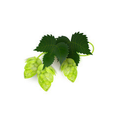 Green realistic beer hop cones with leaves vector