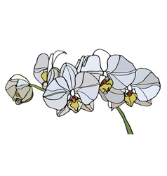 Orchid stained glass vector image vector image