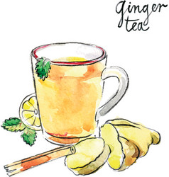 watercolor ginger tea vector image vector image