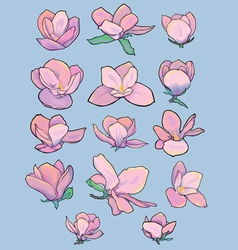 Stylized magnolia flowers vector