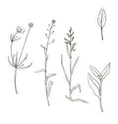 Set of plants silhouettes vector