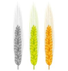 ear wheat vector image