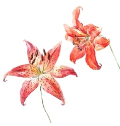 Watercolor lilies vector