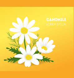 cartoon camomile card poster vector image