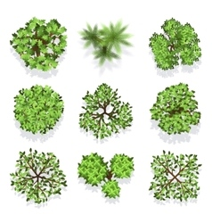 Trees top view set for landscape design and vector