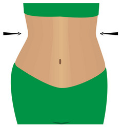 slimmimg female belly vector image
