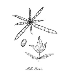 Vegetable and herb of hand drawn sketch moth vector