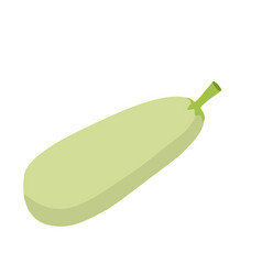 zucchini isolated vegetables on white background vector image