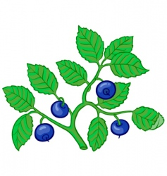 Bilberry branch vector