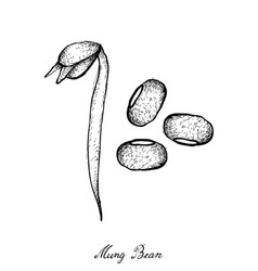 Hand drawn of mung beans and bean sprout vector