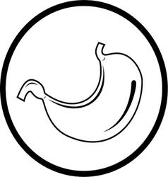 Stomach icon vector
