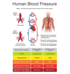 Human blood pressure charts vector