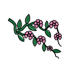 Drawing branch sakura with flowers cherry blossom vector