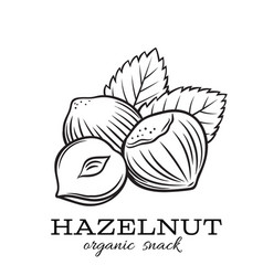 Hand drawn hazelnut vector