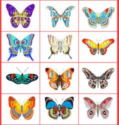 set of summer butterflies vector image vector image