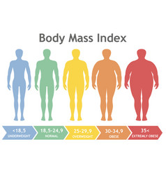 body mass index underweight to extremely obese vector image vector image