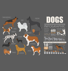 Dog info graphic template puppy breeds pet vector