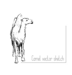 Pencil sketch of two-humped camel vector