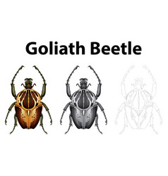 doodle character for goliath beetle vector image