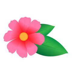 Pink flower pink flower vector