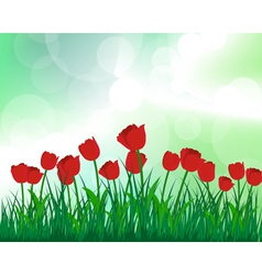 Tulips meadow vector