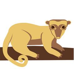 Kinkajou honey bear animal vector