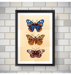 sketch of butterfly vector image