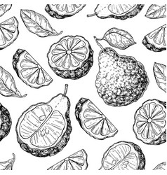 Bergamot seamless pattern drawing isolated vector