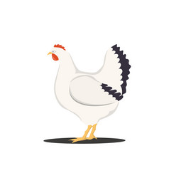 cute cartoon hen isolated vector image vector image