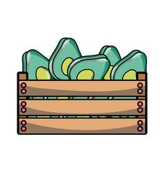 Delicious avocados fruits inside basket vector
