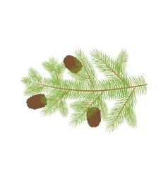 Small christmas fur-tree branch with natural pine vector