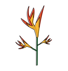 exotic tropical flower bird of paradise vector image