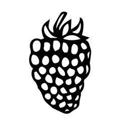 Blackberry doodle style sketch isolated on vector