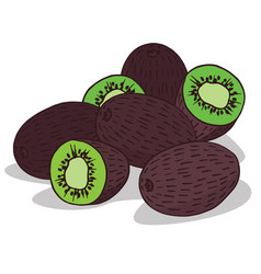 Isolate ripe kiwi fruit vector