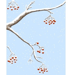 rowanberries under snow vector image vector image