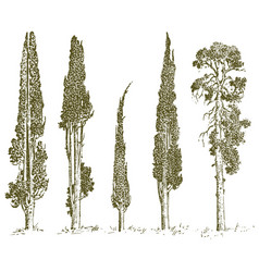 Set of hand drawn trees italian cypress and pine vector
