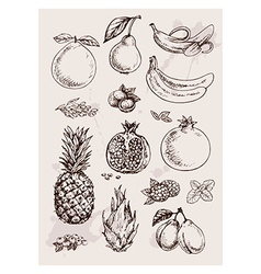 Hand drawing fruits vector