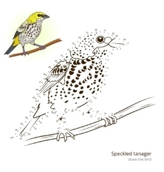 Speckled tanager bird learn to draw vector