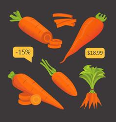 Set carrot sliced carrot vector