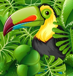 Toucan in the green bush vector