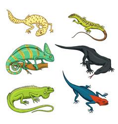 Chameleon lizard green iguana komodo dragon vector