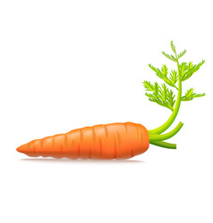 realistic detailed 3d carrots with leaves vector image vector image
