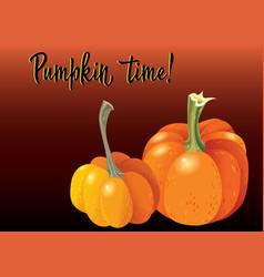 Two orange pumpkin on deep red background vector