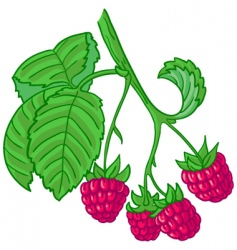 Raspberry branch vector
