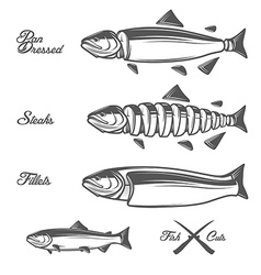 Salmon cuts diagram vector
