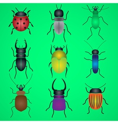 color bugs and beetles icons set eps10 vector image