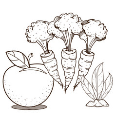 Apple carrot and tobacco farming agricultural vector