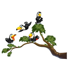 Toucan and tree vector image vector image