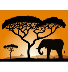 Savannah elephant vector
